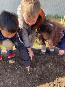 Pre-K Students Planting Seeds